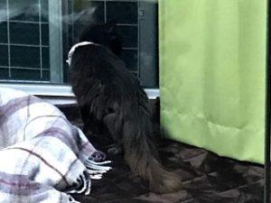 窓の外を見つめるべべちゃん
