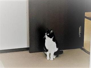 窓の外を見る小次郎君