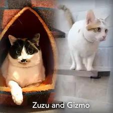 ZuZu&Gismo